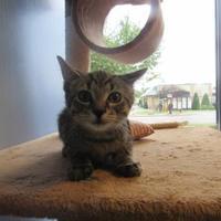 Adopt A Pet :: Squirt - Northfield, MN