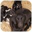 Photo 4 - Hound (Unknown Type)/Labrador Retriever Mix Dog for adoption in Westport, Connecticut - *Beth - PENDING