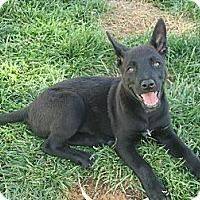 Adopt A Pet :: Piper in So Cal - Jamestown, CA