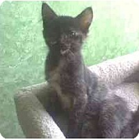 Adopt A Pet :: Lily - Greenville, SC