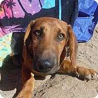 Adopt A Pet :: FRANKIE - Atascadero, CA