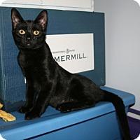 Adopt A Pet :: Oriel - Alexandria, VA