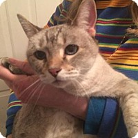 Adopt A Pet :: Zelda - Pittstown, NJ