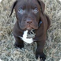 Adopt A Pet :: Travie McCoy: Java Pup - Cumming, GA