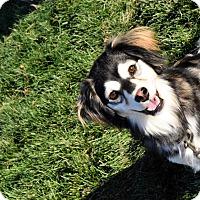 Adopt A Pet :: Meera - Meridian, ID