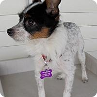 Adopt A Pet :: SHELBY - Elyria, OH