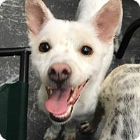 Adopt A Pet :: Gem - Sherman Oaks, CA