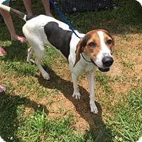 Adopt A Pet :: Noel - Erwin, TN