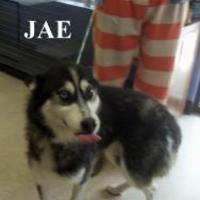 Adopt A Pet :: Jae - Franklin, NC
