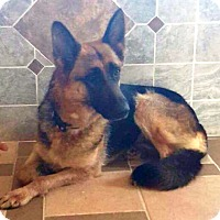 Adopt A Pet :: I'M ADOPTED Bianca - Oswego, IL