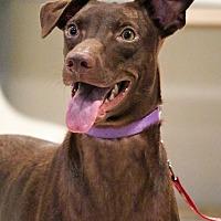 Adopt A Pet :: Miffy - San Mateo, CA