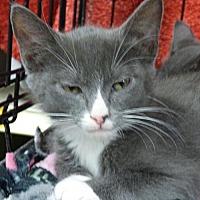 Adopt A Pet :: Toby - Logan, UT