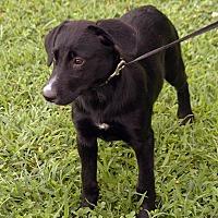 Adopt A Pet :: Gretchen - Maynardville, TN