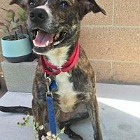 Adopt A Pet :: Queenie - Los Angeles, CA