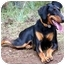 Photo 2 - Doberman Pinscher Dog for adoption in Long Beach, California - Loki