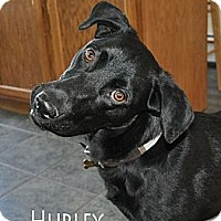 Adopt A Pet :: Hurley - Hollis, ME