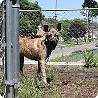 Adopt A Pet :: Leo - Grand Rapids, MI