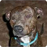 Adopt A Pet :: Adam - Emory, TX