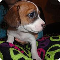 Adopt A Pet :: Betty - San Antonio, TX