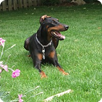 Adopt A Pet :: Bentley - Allegan, MI