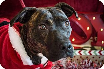 Hound (Unknown Type) Mix Dog for adoption in Flint, Michigan - Betty #5061