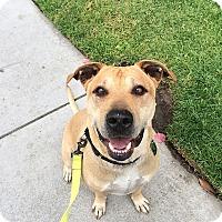 Adopt A Pet :: Smokey - Santa Monica, CA