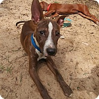 Adopt A Pet :: Pacey - West Warwick, RI