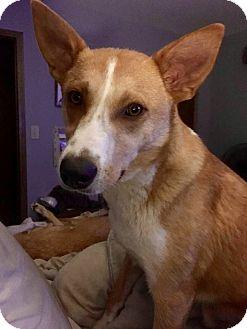 Border Collie Mix Dog for adoption in Regina, Saskatchewan - Popeye