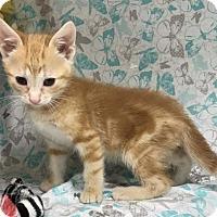 Adopt A Pet :: Tadashi - Menominee, MI