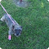 Adopt A Pet :: Toto - Chewelah, WA