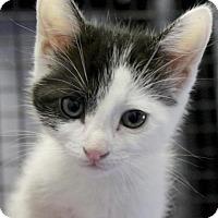 Adopt A Pet :: Gigi - Plano, TX
