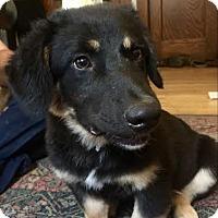 Adopt A Pet :: Braun - Brooklyn Center, MN