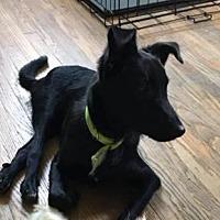 Adopt A Pet :: Salem - Special Needs - Gilbertsville, PA