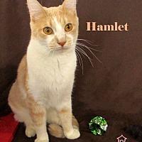 Adopt A Pet :: Hamlet - St Louis, MO