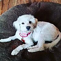 Adopt A Pet :: Mamacita - Rancho Santa Fe, CA