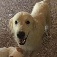 Adopt A Pet :: Sky - Kaufman, TX