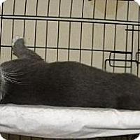 Adopt A Pet :: Spunky - Miami, FL