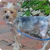 Adopt A Pet :: Echo - Fairfax, VA