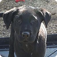 Adopt A Pet :: Landon - PENDING - kennebunkport, ME