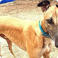 Adopt A Pet :: Story - Pearl River, LA