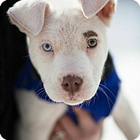 Adopt A Pet :: Sprout - Reisterstown, MD