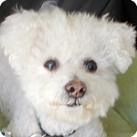 Adopt A Pet :: Harley - Plain City, OH