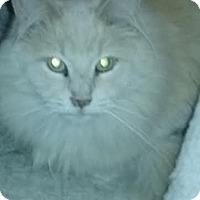 Adopt A Pet :: Louie - Delmont, PA