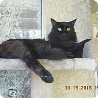 Adopt A Pet :: Patrick - Laguna Woods, CA