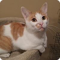 Adopt A Pet :: Jasper - Lenhartsville, PA