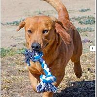 Adopt A Pet :: Oliver - Anaheim, CA