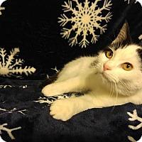 Adopt A Pet :: Cowgirl Baby - McDonough, GA