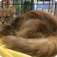 Adopt A Pet :: Alicia - Cocoa, FL