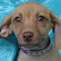 Adopt A Pet :: Sabrina Pacey-Murray - Cuba, NY