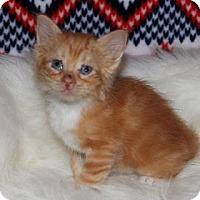 Adopt A Pet :: Soft Kitty - Mission, KS
